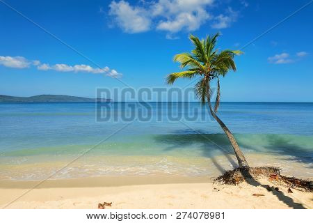 poster of Travel Vacation Tropical Destination. Palm Tree Beach Landscape. Travel Vacations Destination. Trave