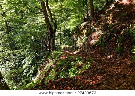Footpath through a green forest in the French Alps