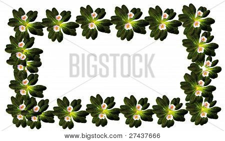 frame of primrose flowers