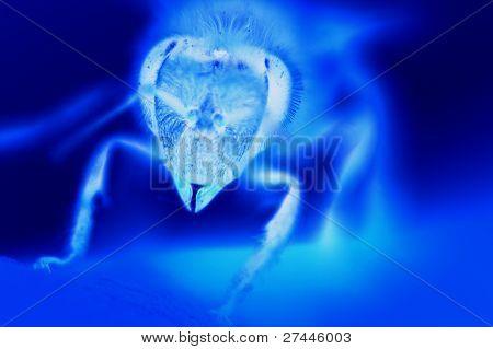 X-Ray bee