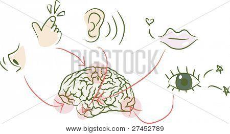 Brain,