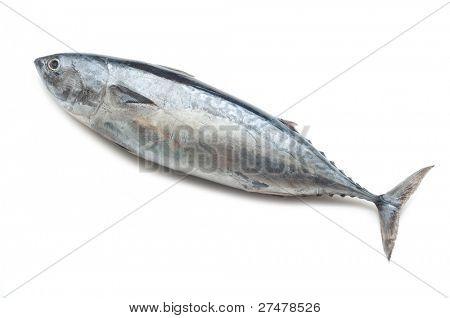tuna on white