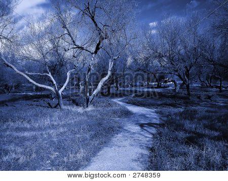 Running Trail Through Grove