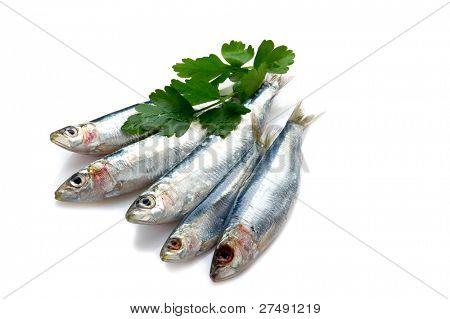 sardines and parsley