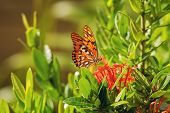 Nature Background Butterfly. Butterfly Insect In Nature. Nature Insect Butterfly On Red Flowers Plan poster