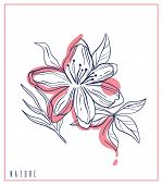 Hand Drawn Card Sketch Style Wild Flowers . Line Nature Style,drawing Flora,hand Drawn Botany. poster