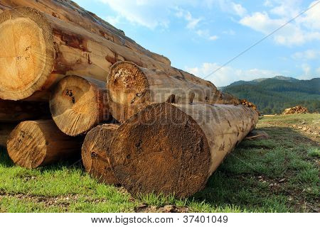 timber logs in the depot