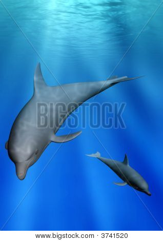 Delphine unter Wasser