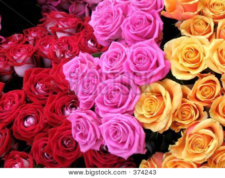 Red, Pink And Peach Roses Close-up