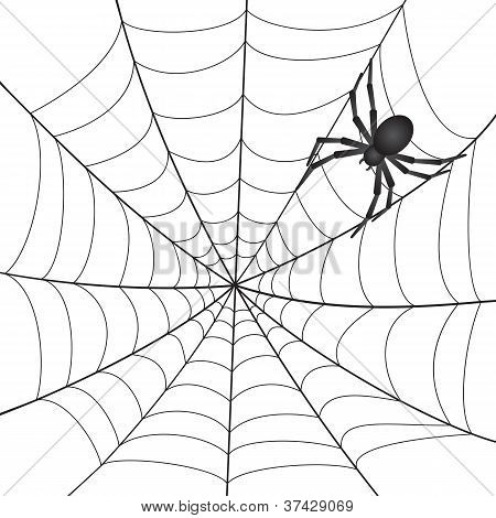 A Spiderweb with Spider