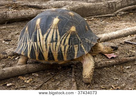 Turtle In Madagascar