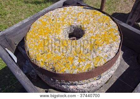 Ancient Millstone With Lichens