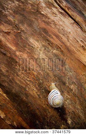 Closeup of a snail on a tree bark surface