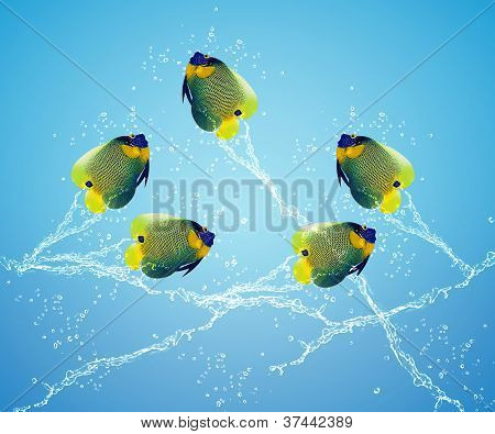 Angelfish Jumping