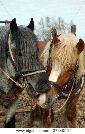 Naughty Biting Horse
