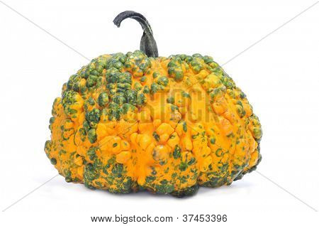 closeup of a warty pumpkin on a white background