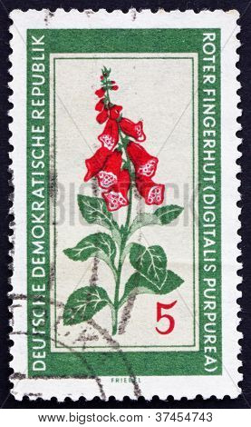 Postage stamp GDR 1960 Purple Foxglove, Medicinal Plant