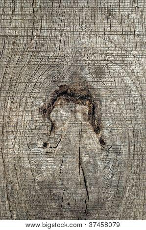 Old weathered wooden board knar