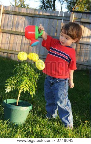Little Boy Watering Marigolds