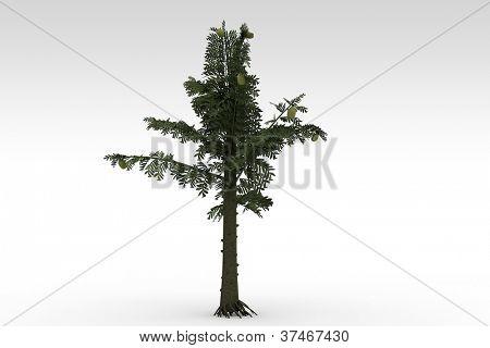 Alethopteris  serli adult prehistoric tree