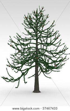 Araucaria medium prehistoric tree isolated