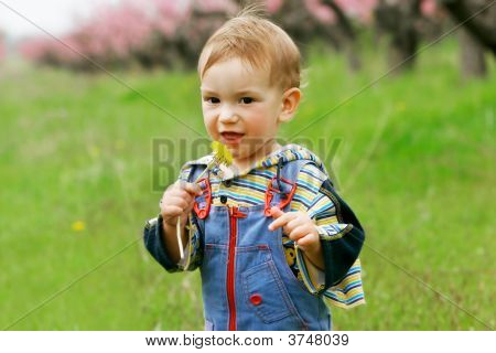 Baby Boy With Dandelion Portrait