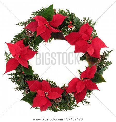 Christmas wreath of poinsettia flower heads with holly, mistletoe, ivy, pine cones and cedar leaf sprigs over white background.