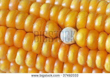 Single Pearl Ear Stud on Maize Corns