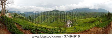 The Panorama Of Tea Plantations And Waterfall In Nuwara Eliya, Sri Lanka