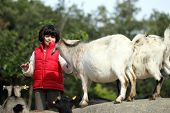 stock photo of pygmy goat  - details of domestic pygmy goat in farm with a girl - JPG