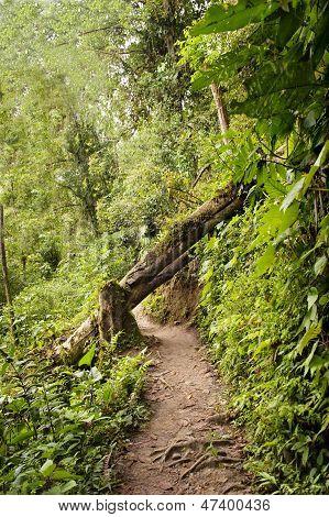 Ecological Path In Ecuador
