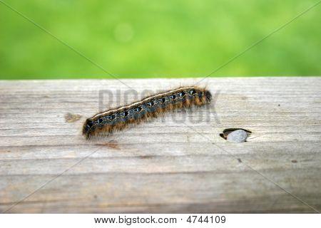 Catapillar Crawling
