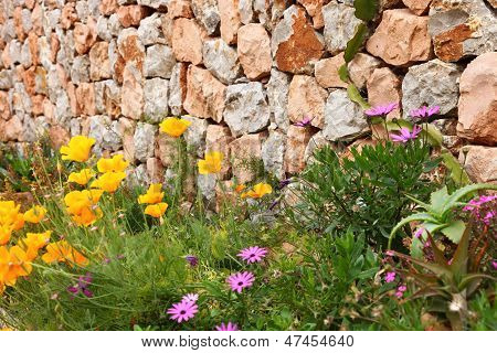 Dry Stone Wall And Flowers