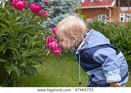 Baby boy smelling giant rose