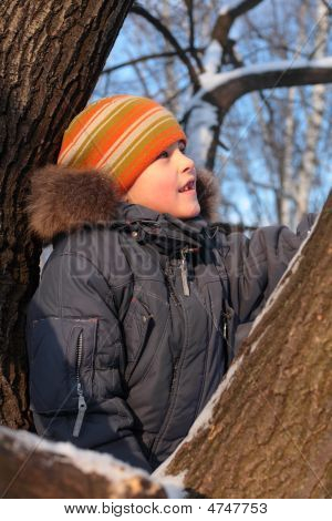 Boy On Tree In Wood