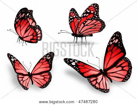 Vier rote Schmetterling, Isolated On White Background