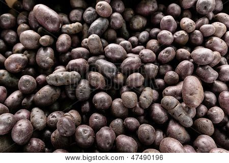 Small purple potatoes