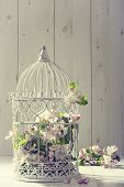stock photo of apple blossom  - Bird cage filled with apple tree blossom with vintage effect - JPG