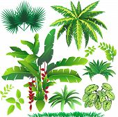 pic of jungle flowers  - vector illustration of many kind of leaves - JPG