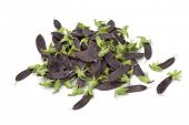 picture of snow peas  - Heap of purple snow peas on white background - JPG