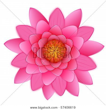 Beautiful pink lotus or waterlily flower isolated.