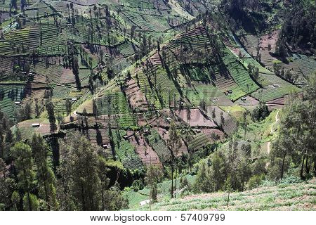 Steep Agricultural Land On Mountain Slopes