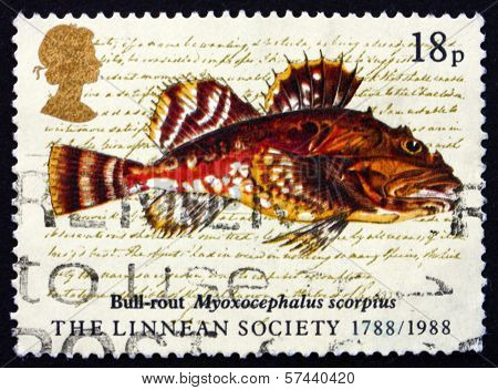 Postage Stamp Gb 1988 Bull-rout Fish