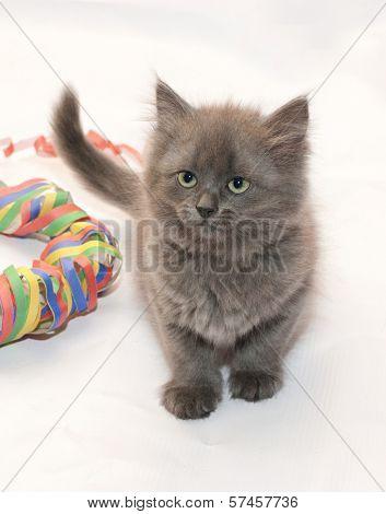 Fluffy Gray Kitten Sitting Next To Serpentine