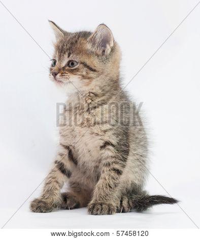 Striped Fluffy Kitten Sitting Looking Away