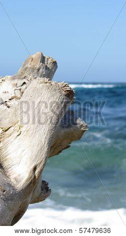 Tree trunk on the beach