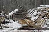 picture of landfills  - A stack of wooden pallets outside a landfill piled up in the snow - JPG