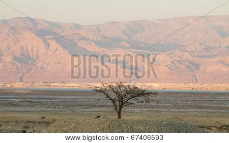 Tree In The Desert.