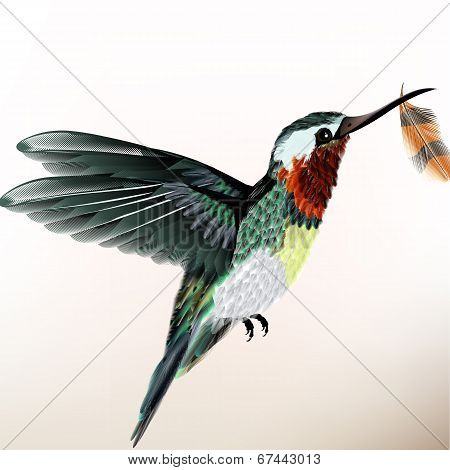 Background With Colorful Hummingbird