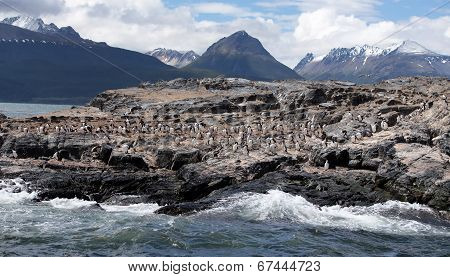 Ushuaia Landscape - Cormorants on Large Rock Formation